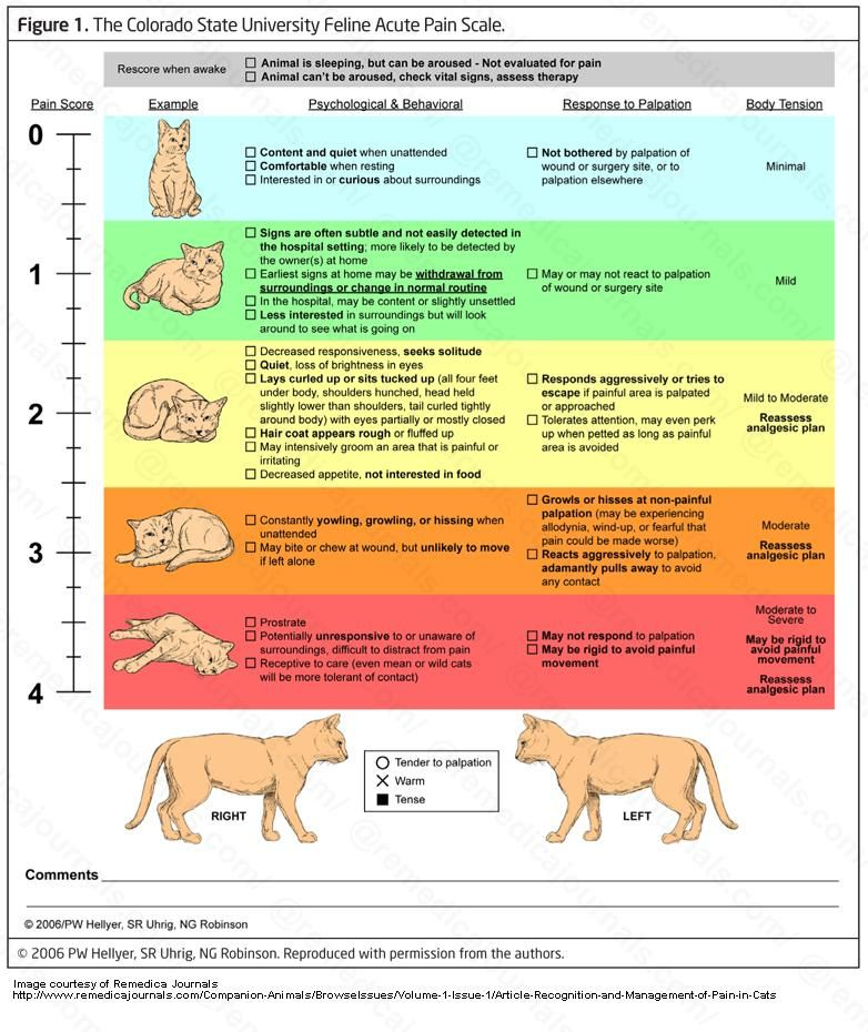 Pin On Feline Pancreatitis