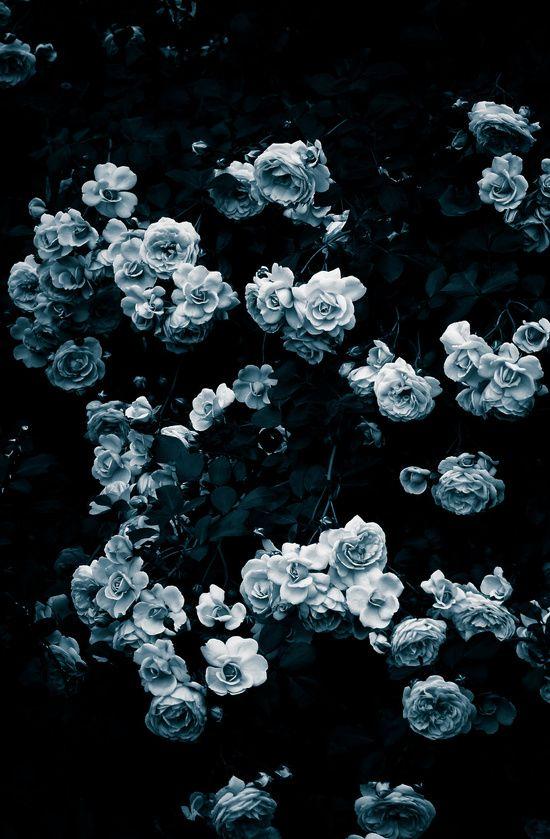 Rose Rose Rose Art Print By Noirblanc777 Society6 Flower Background Wallpaper Flower Phone Wallpaper Flower Aesthetic