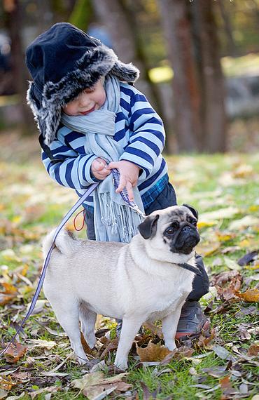 It's never too soon to give a kid a pug/give a pug a kid ...