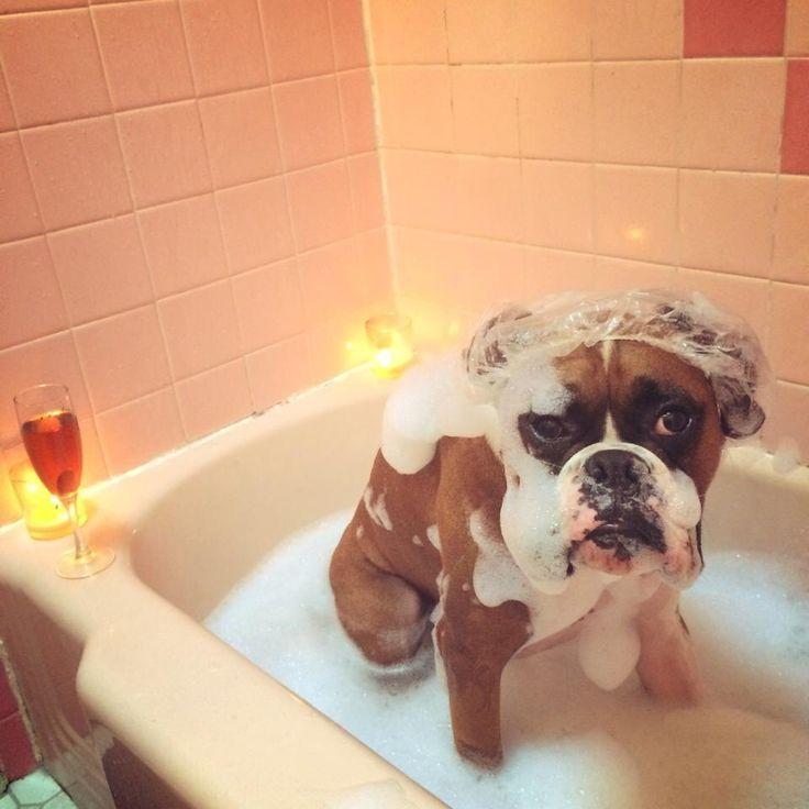 Resultado de imagen para taking a bath with my boxer dog