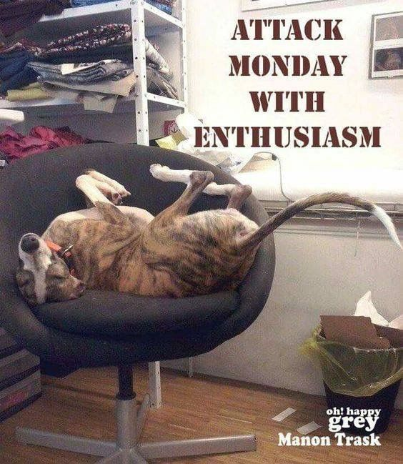 Pin by Hanna Walter on Dogs | Greyhound, Funny dog memes ...