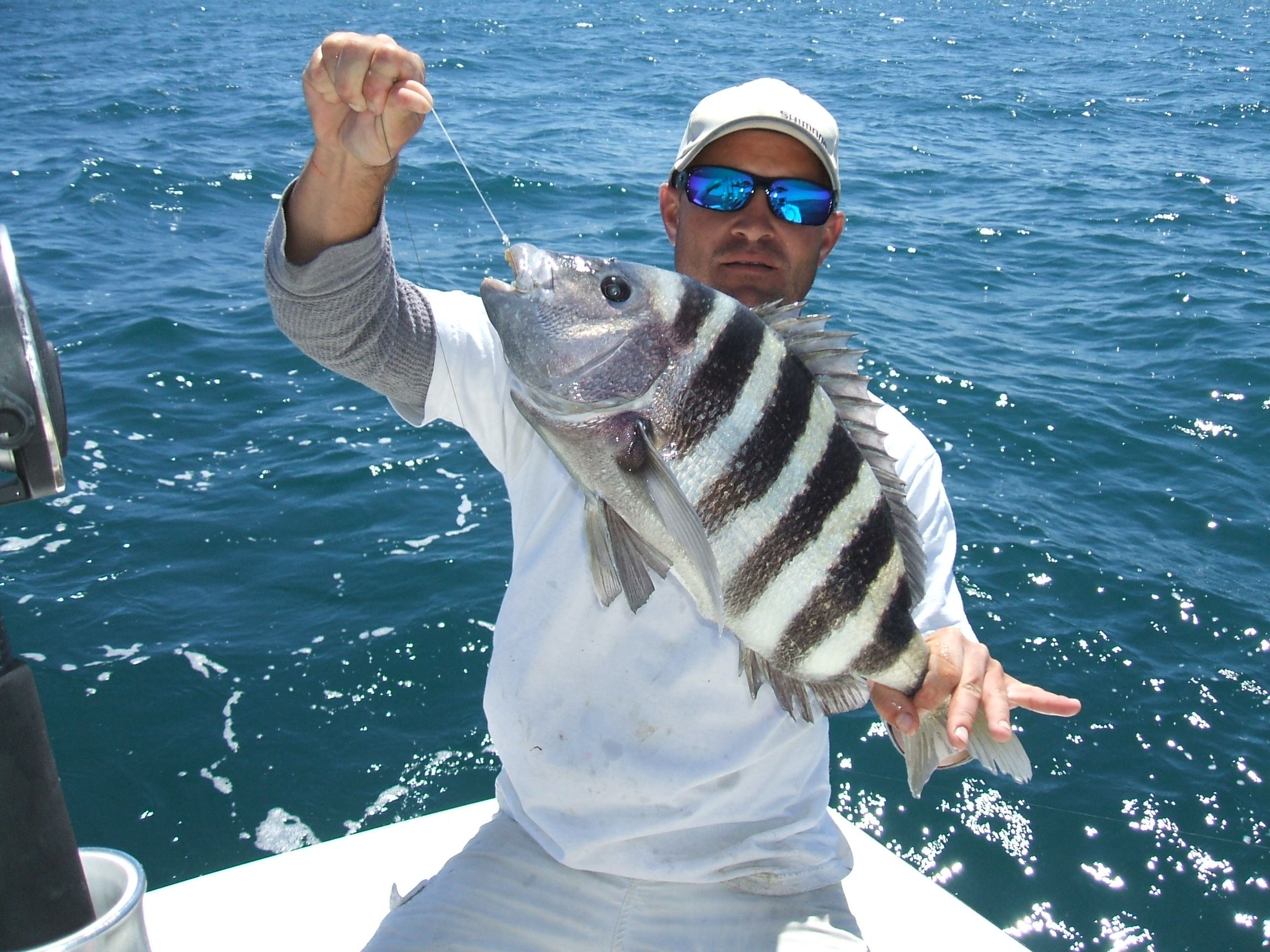 Sheepshead Fish Sheepshead 15 Inches 2 5lbs Sheepshead 17 Inches 4 25 Lbs Sheepshead Florida Fish Fish Pictures