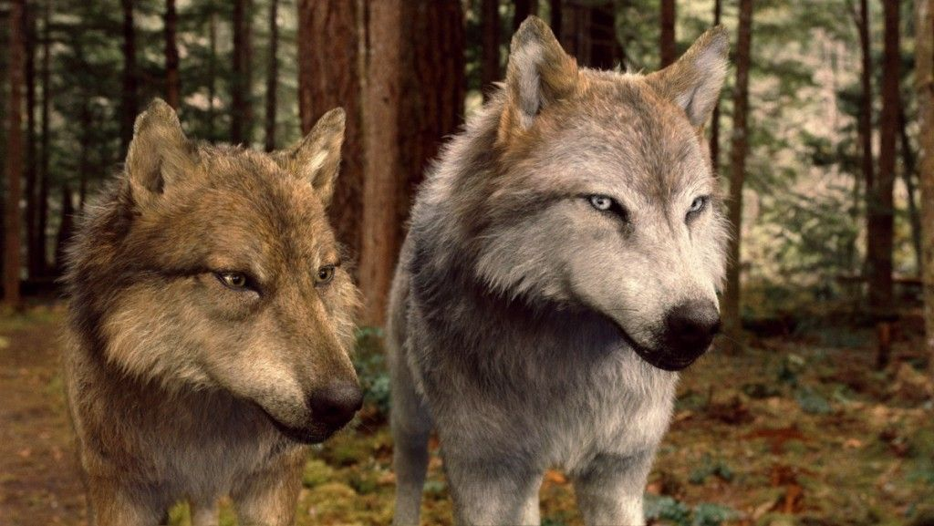Seth and Leah Clearwater in their werewolf forms ... Twilight Wolf Pack Seth