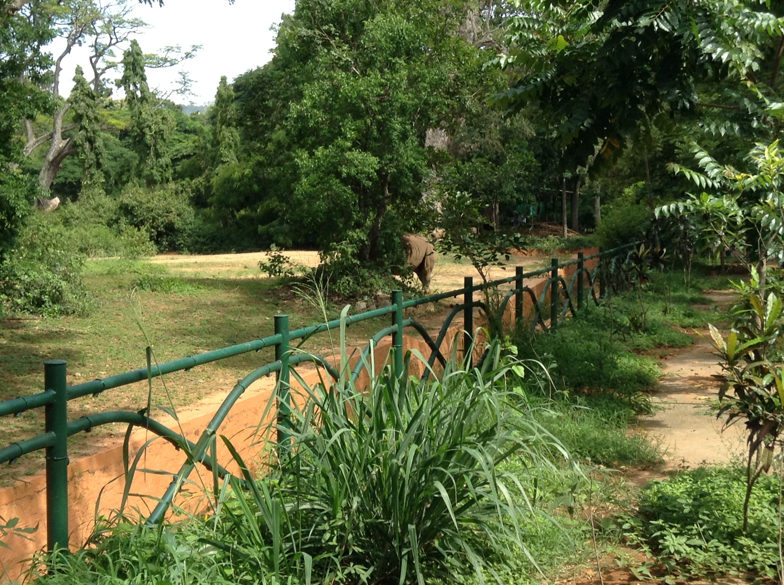 f6bd68a6d6873eb97fc3b4fa6bf09ac8 - Mysore Zoo Sri Chamarajendra Zoological Gardens