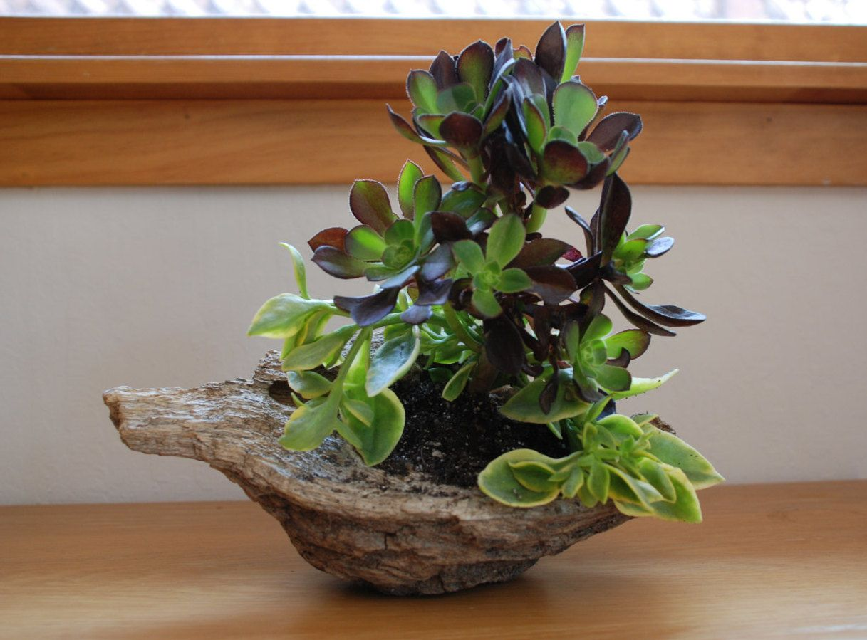 Succulent Driftwood Home Accent Decor Centerpiece by MakerDyer on Etsy