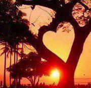<3-shaped trees
