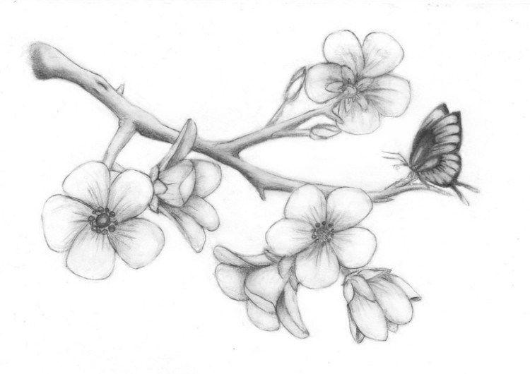Sketsa Gambar Bunga Berikut Cocok Untuk Kamu Yang Masih Belajar