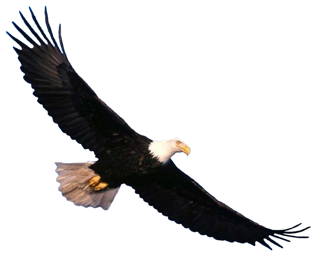 Update [4/1/2016 0322] The new American Bald Eagle hot