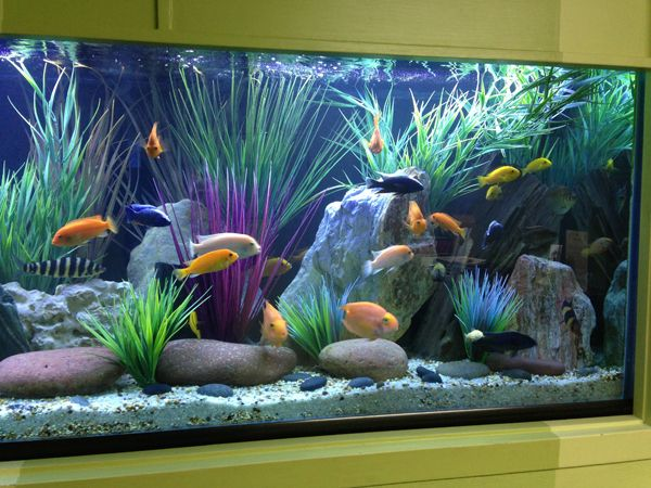 Freshwater Aquarium In A Hospital We Service The Addition Of