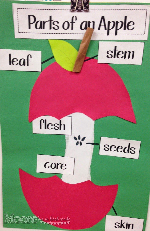 Moore Fun In Kindergarten  Apple Week 2014