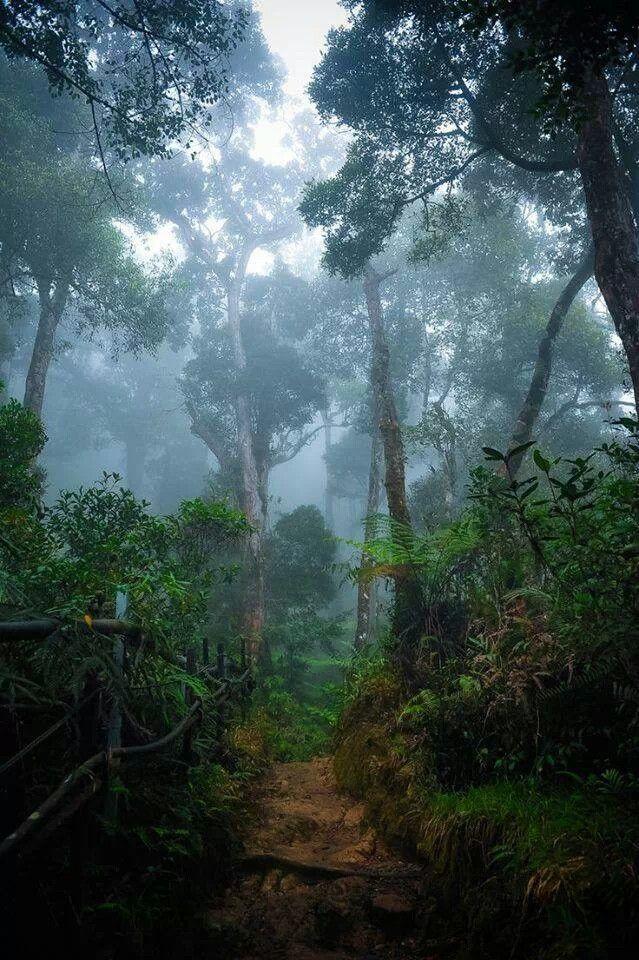 Borneo Rainforest lush and dark, misty and beautiful