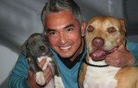 #CesarMillan named National Spokesperson for Pet Adoptathon