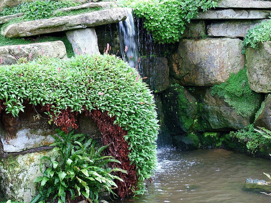 Garden water features  Lovely Excellent use of plants backyard water garden  backyard