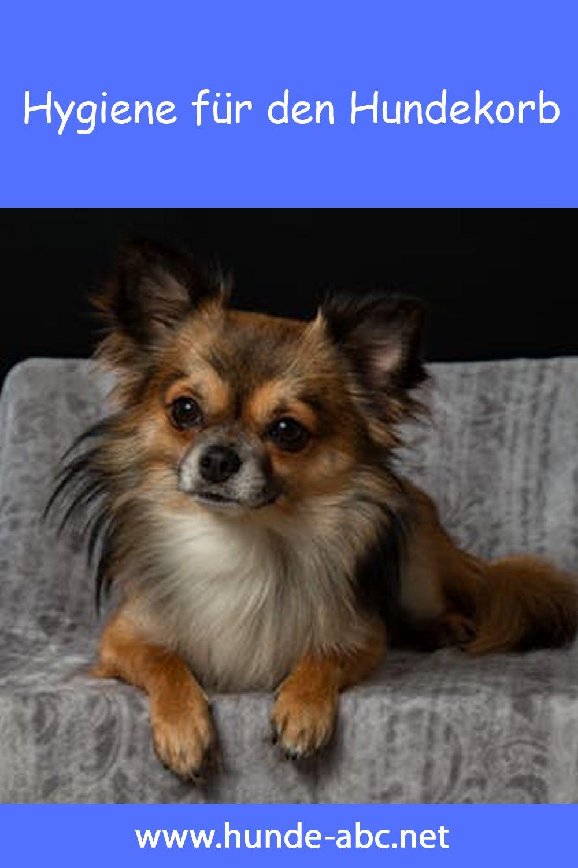 Hundekorb Kaufen Onlineshop Gunstig Kaufen 30 Rabatt In 2020 Hunde Hundeschule Hundekorb
