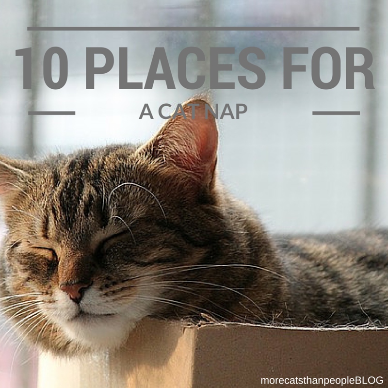 More Cats Than People 10 Places Cats Love to Nap