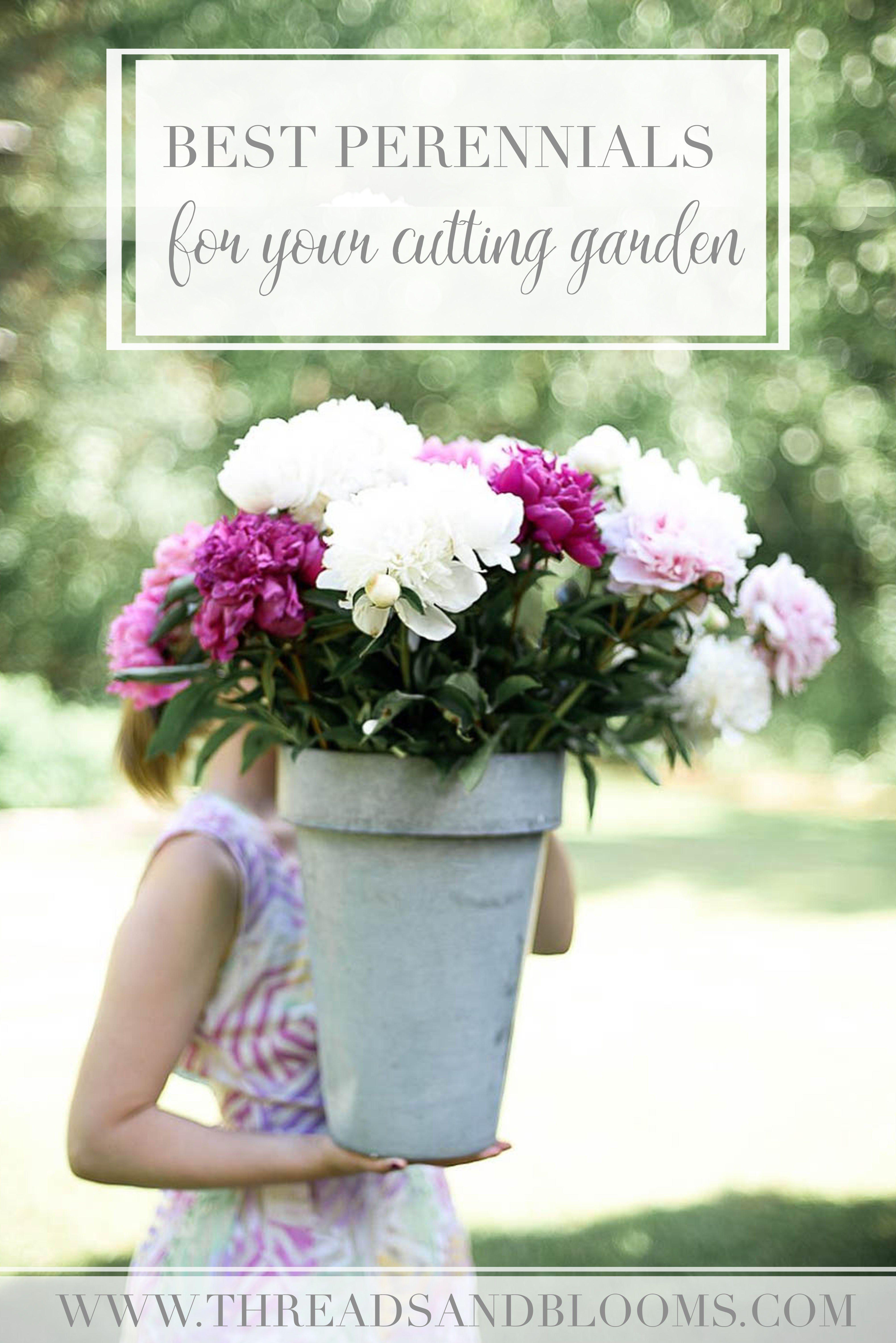 Cutting Garden Perennials Low Maintenance Plants For Cut Flowers