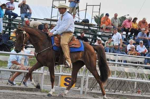 What's your favorite #rodeo discipline? He's great at #roping!  You can meet him if you click on the picture! Yee haw!