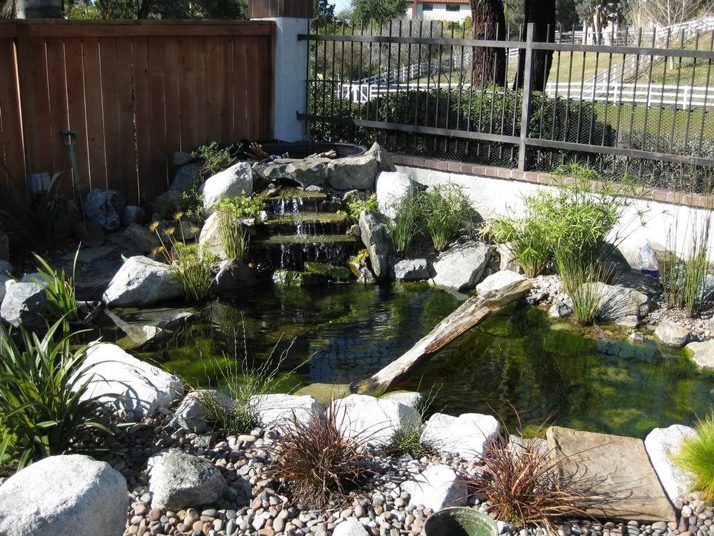 Outdoor habitat for tortoise habitat outdoor my for Outside fish pond