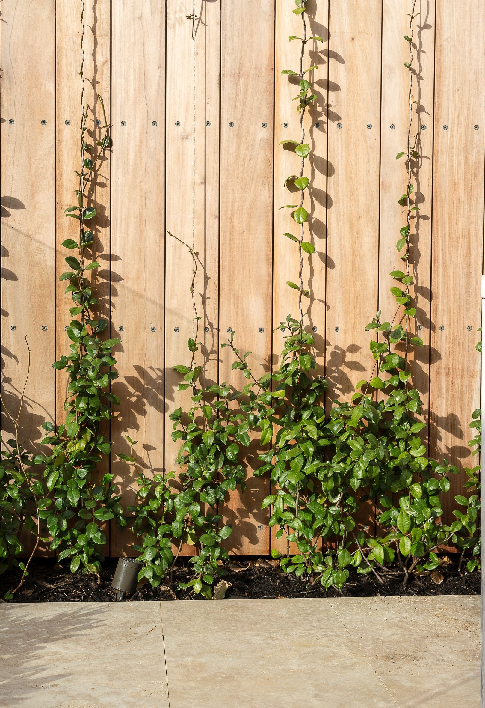 Timber slats, brought to life with a creeper. | Walls | Pinterest ...