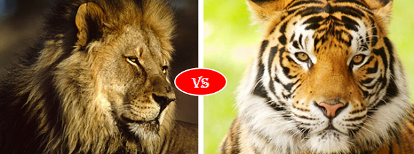 African lion vs Bengal Tiger | Animals Comparison ...