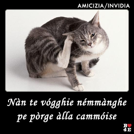 Proverbi Bitonto Micio Pulce Gatto Cat Fleas Cat Ear Mites Pets