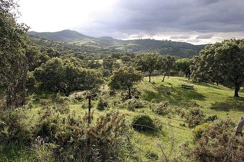 Pin En Sierra De Aracena Y Picos De Aroche