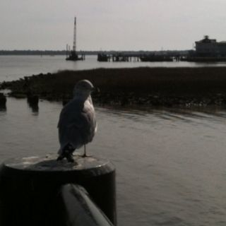 Seagull 1.25.12 Charleston, SC
