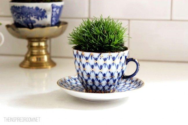 Teacup Gardens 5 Minute Miniature Container Garden Teacup Gardens Indoor Herb Garden House Plants Indoor