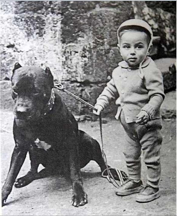 Inverno Nanny Dog Pitbull Terrier Vintage Dog