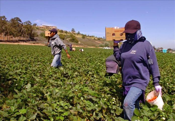 El acoso sexual ha sido uno de los principales problemas al que se han enfrentado las trabajadoras agrícolas en el estado de Florida, la mayor parte de ellas inmigrantes indocumentadas. EFE/Archivo  http://www.elperiodicodeutah.com/2015/09/inmigracion/el-acoso-sexual-ha-sido-uno-de-los-principales-problemas-al-que-se-han-enfrentado-las-trabajadoras-agricolas-en-el-estado-de-florida-la-mayor-parte-de-ellas-inmigrantes-indocumentadas-efearchivo/