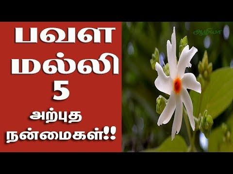 Aazhiya Pavala Malli Poo Benefits In Tamil Health Tips In Tamil