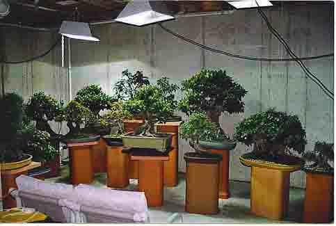 How I Grow Bonsai Indoors Grow Lights For Plants Indoor Plants Plants