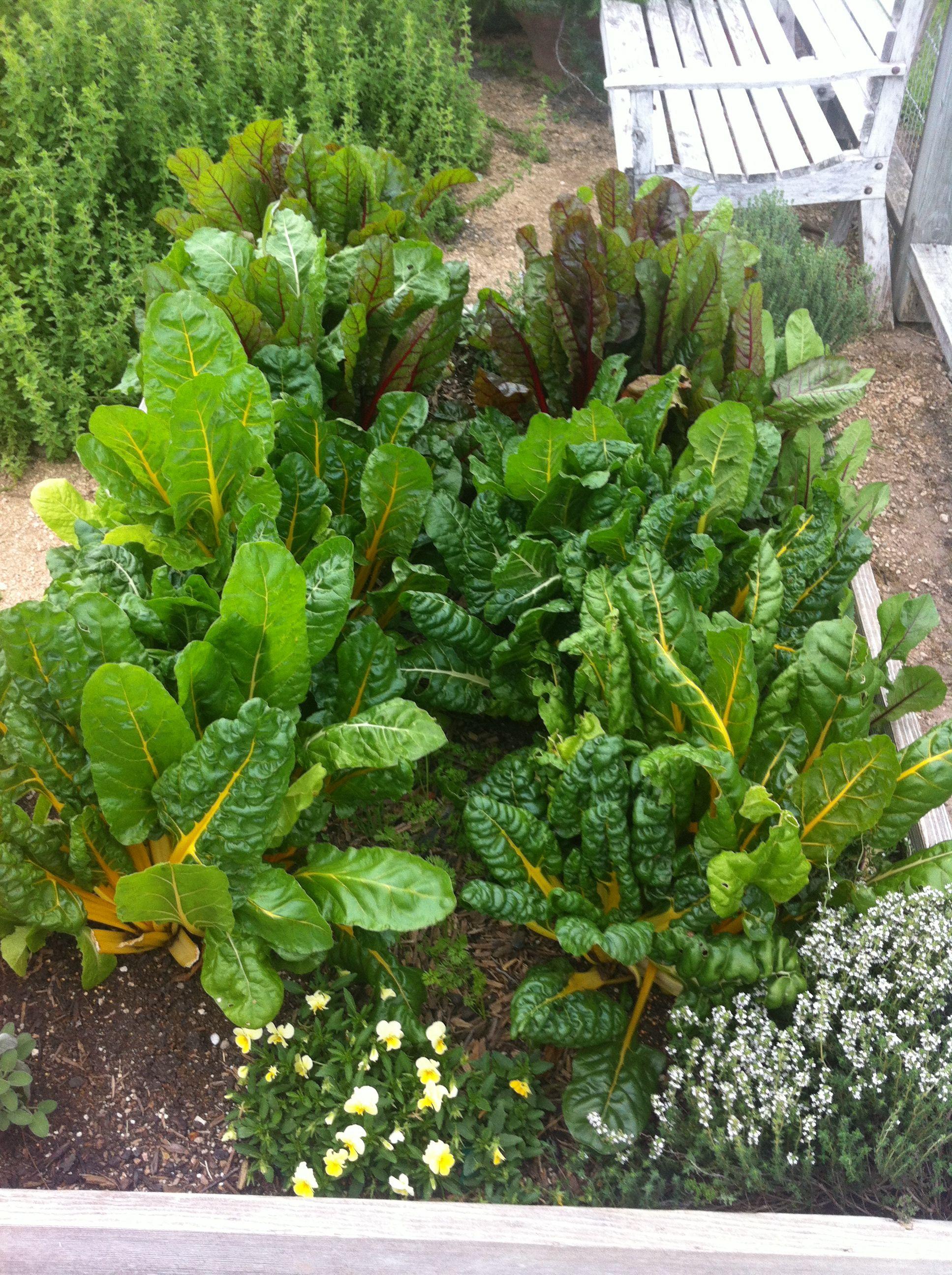 Lettuce Talk. . .