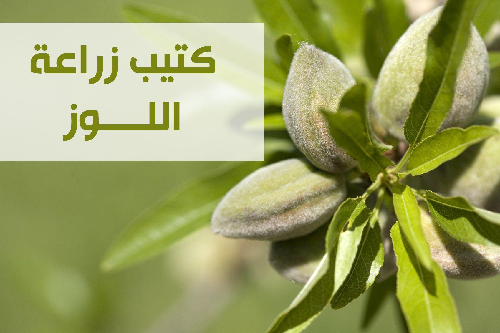 برنامج تسميد البصل فى الاراضى الصحراويه Farmland Outdoor Vineyard