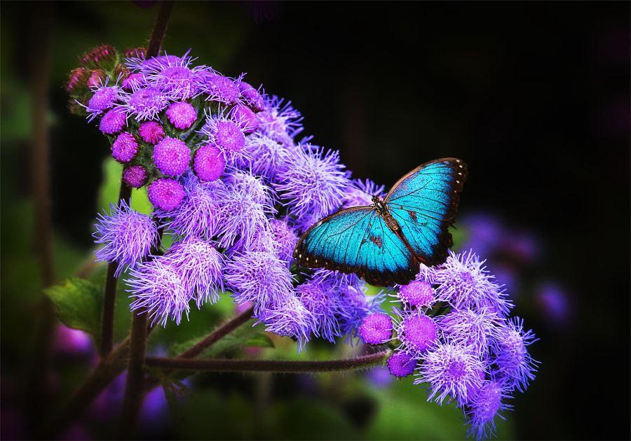 Pin Von Malus Auf Mariposas Schone Schmetterlinge Schmetterling Falter