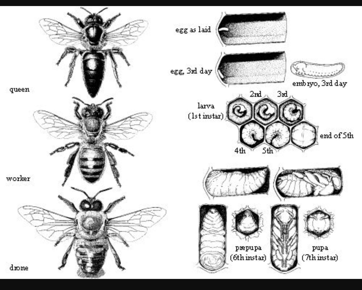 Pin By Kay Llewellyn On Bees