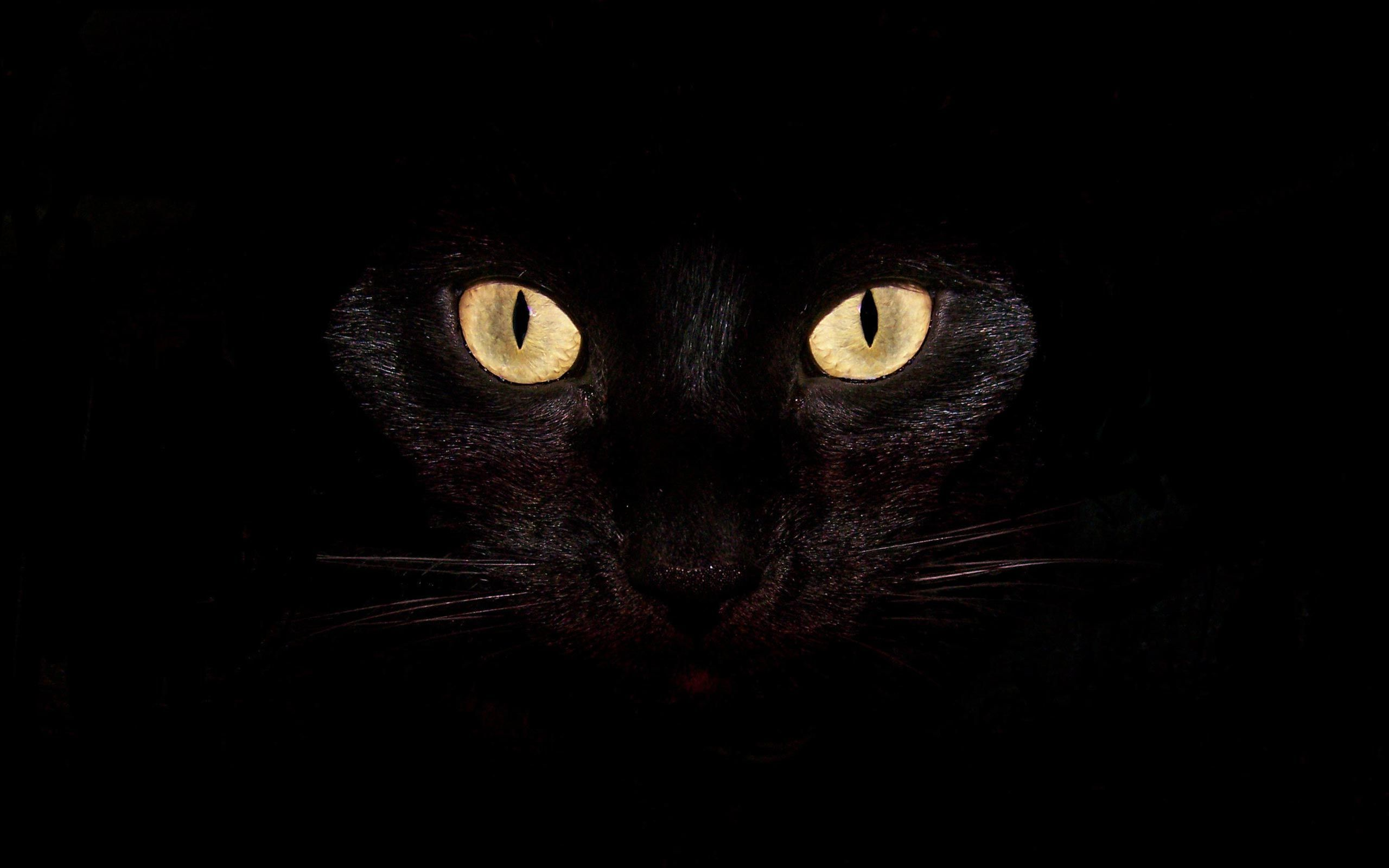 Black Cat Abstract Black Cat Backgrounds Wallpaper In High Resolution For Free With Images Cat Background Black Cat Eyes Cats