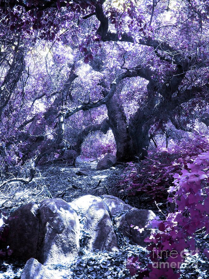 ✯ Magic Forest... my daughter said this one is where fairies would live!