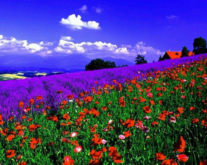 Purple Color by Julia Polyakoff