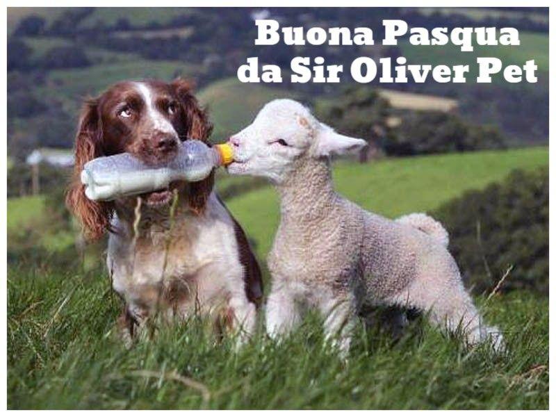 Buona Pasqua da SIR OLIVER PET
