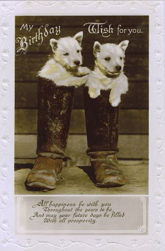 Westie Birthday Card Dogs Vintage West Highland White Terrier