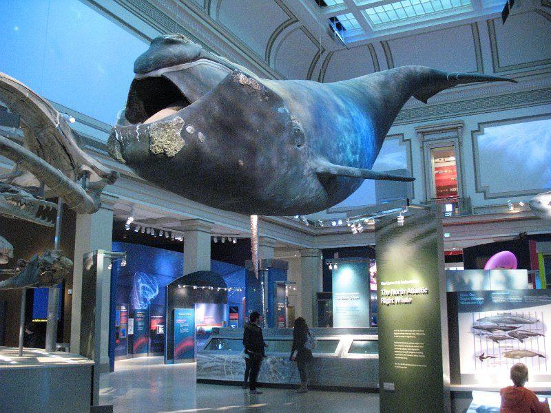 Foyer Museum Washington Dc : Smithsonian national museum of natural history
