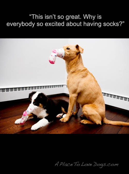 Dog Quote Dog Quotes Dogs