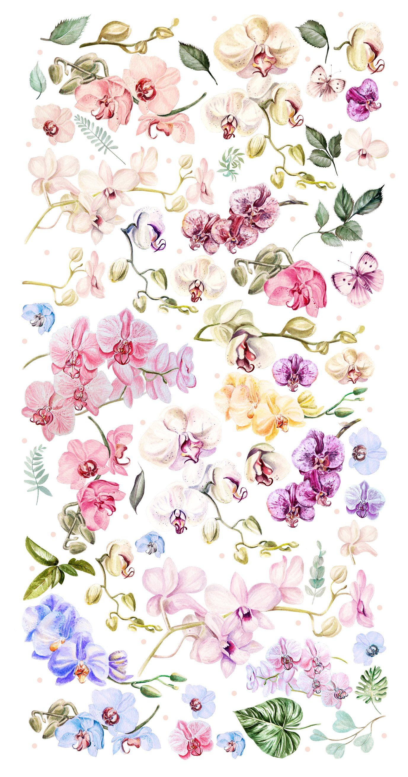 Hand Drawn Watercolor Orchids Orchid Wallpaper Orchids Painting Flower Wallpaper