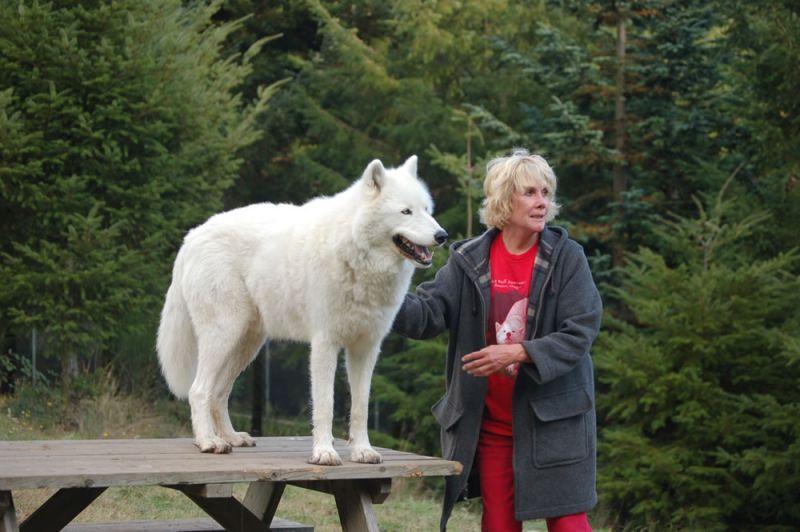 White Wolf Sanctuary