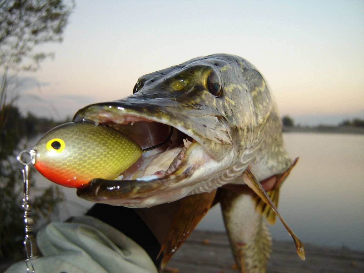Pike google search projects to try pinterest for Pike ice fishing lures