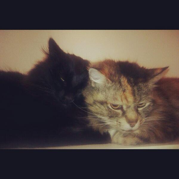 Saffy and Milo