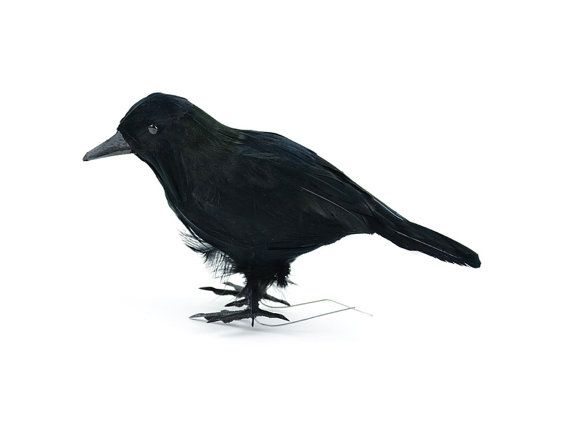 Standing Black Feathered Crow 6 Back In Stock Order Now Halloween Decoration Wreath Faux Bird Halloween Decorations Wreaths Crow Feather Spooky Decor