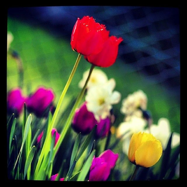 Happy first day of spring! #Celebrate #Spring #NovaScotia #Canada #Flowers #ByeByeWinter #PicoftheDay #InstaHappy