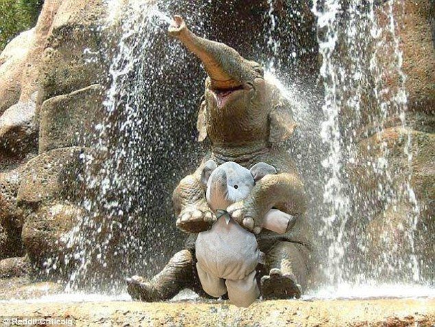 Lost cuddly elephant sweeps the web thanks to a